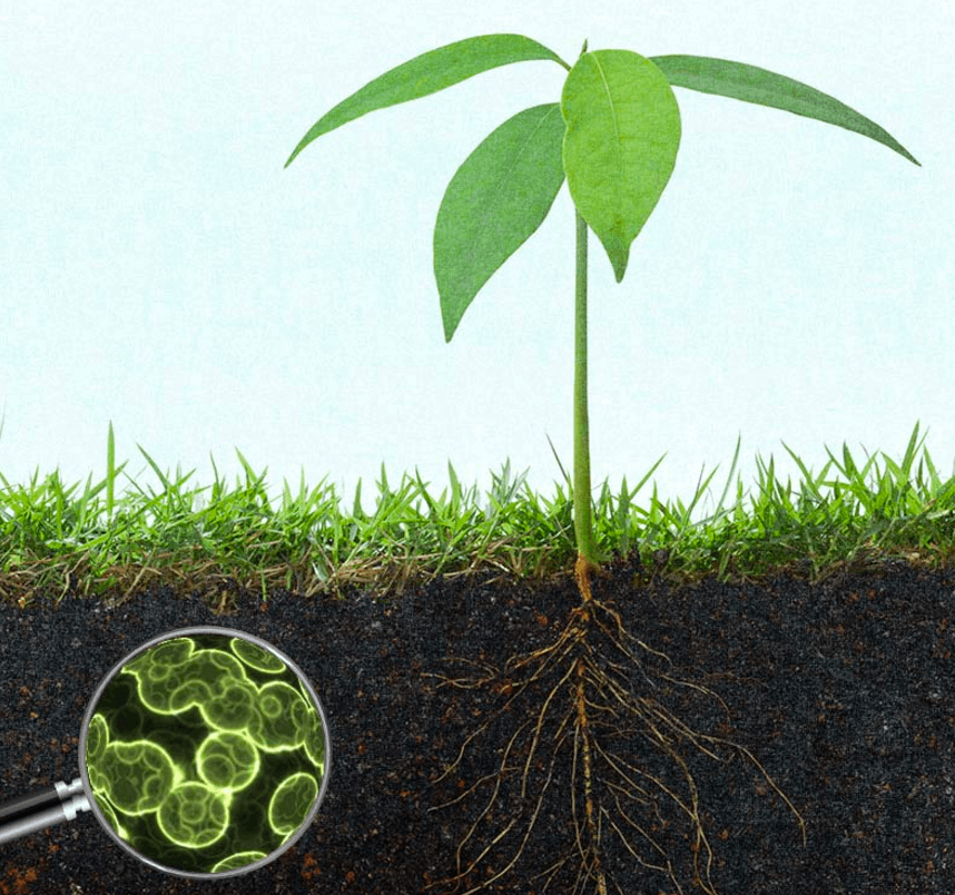 microorganisms in agriculture