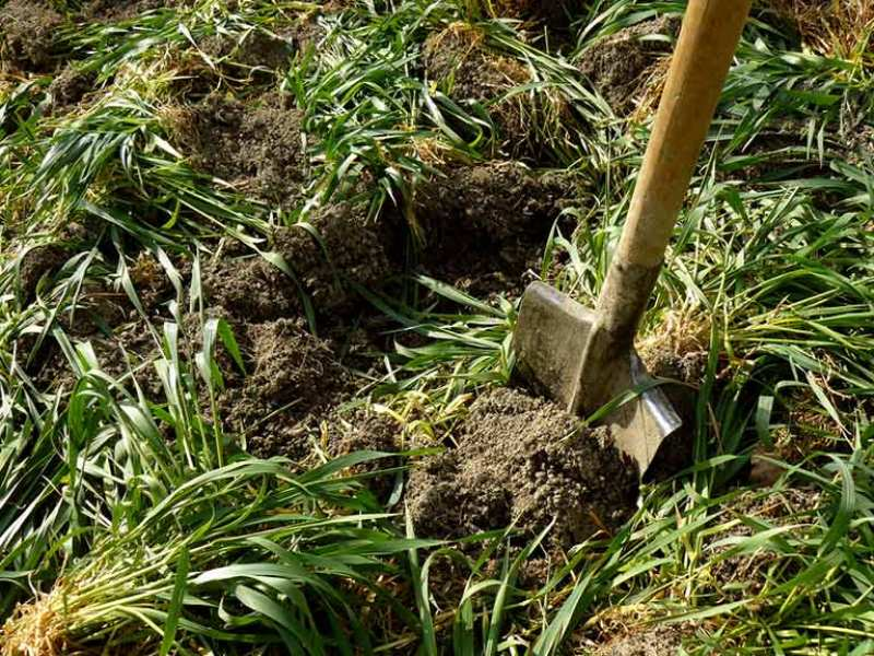 green manuring benefits