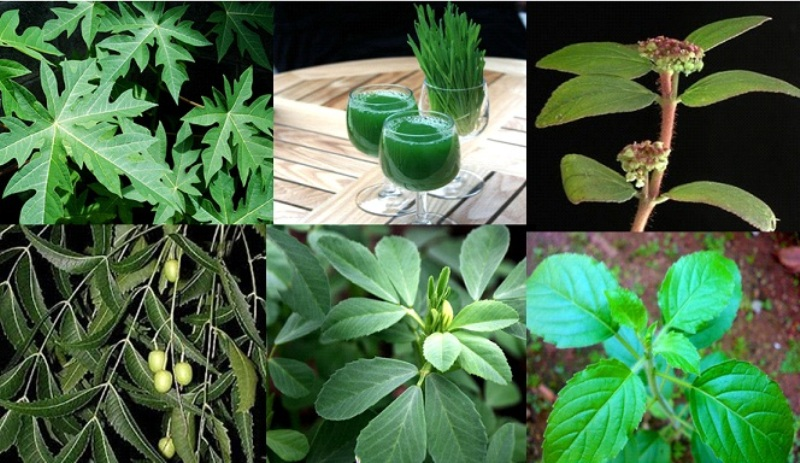 Home Remedies For Dengue