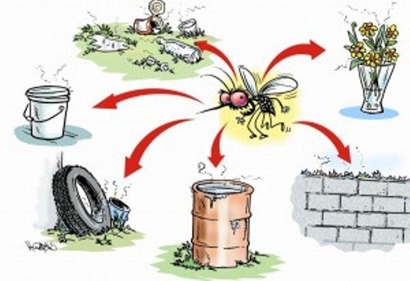 Spreading Dengue