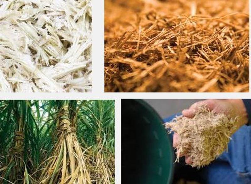 Sugarcane Fiber Waste