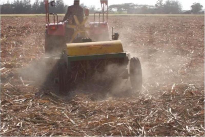 Sugarcane Trash