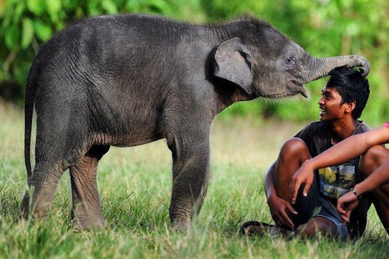 Greeting Baby Elephant
