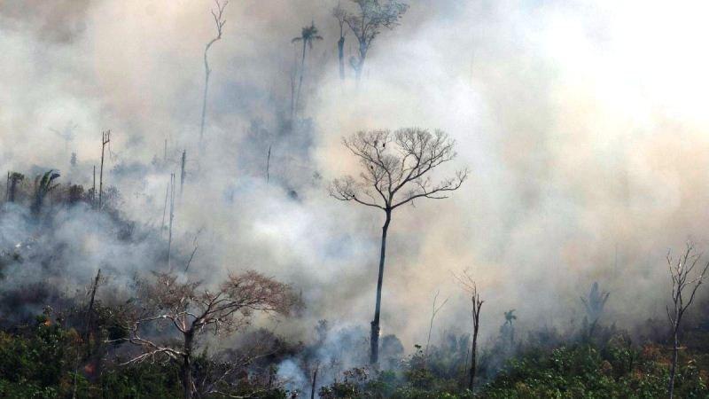 Amazon Rainfall Forest