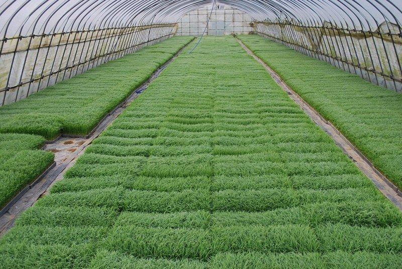 Vegetable Pro tray method