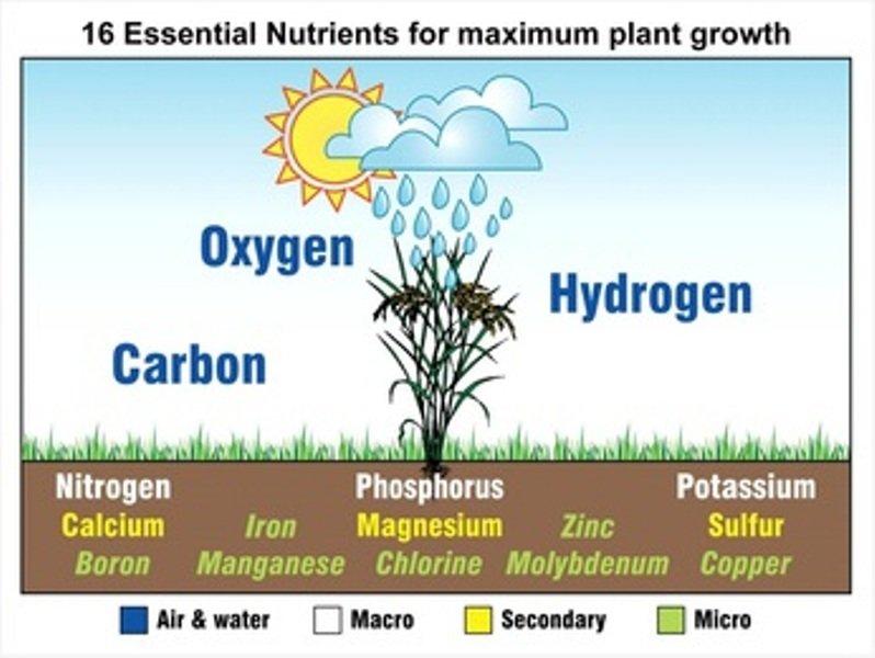 16 Essential Nutrients