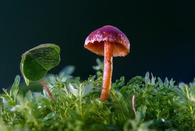 Plastic Eating Mushrooms
