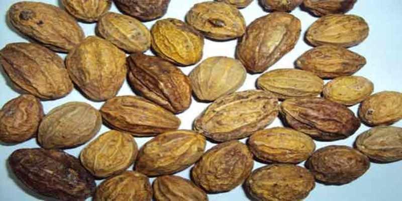 Vibhita or Vibhitaka