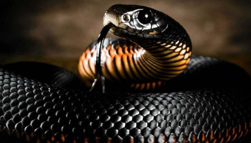 World snake Awareness day