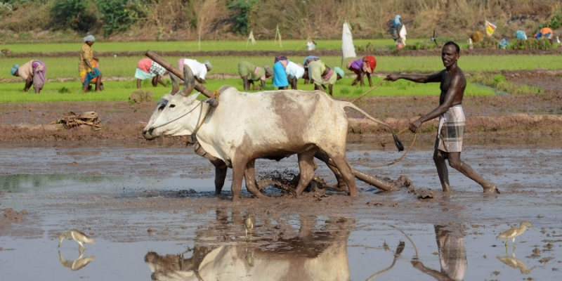 Farmers Pension scheme