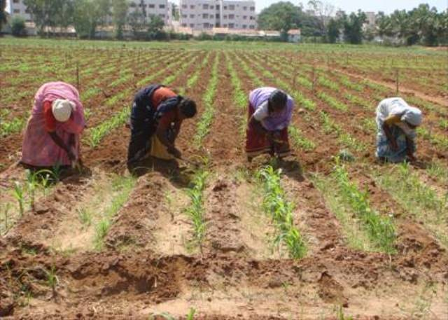 Hand sowing