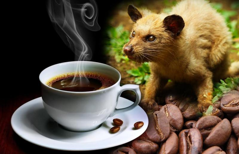 Most Expensive Kopi luwak Coffee