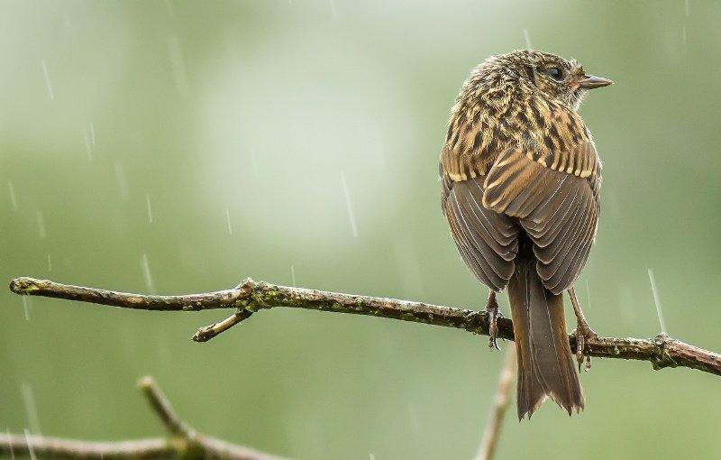 Birds during Rain