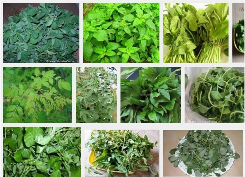 Group of Green Leafy