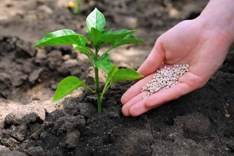 Application of Manure and Fertilizers