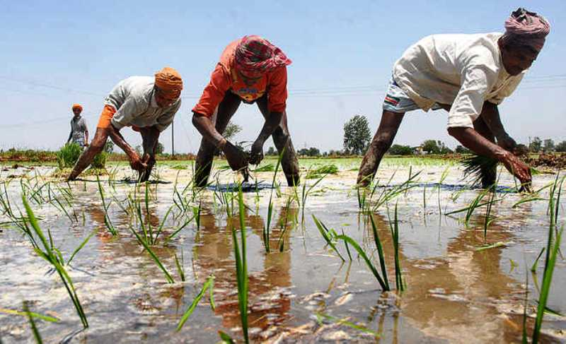 Contract Base Farming