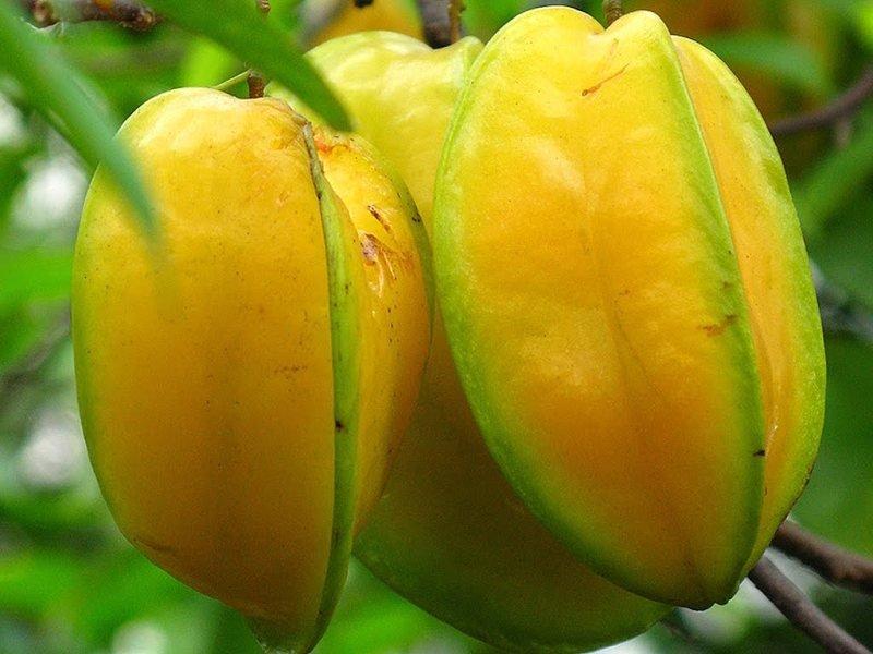 Carambola Fruits