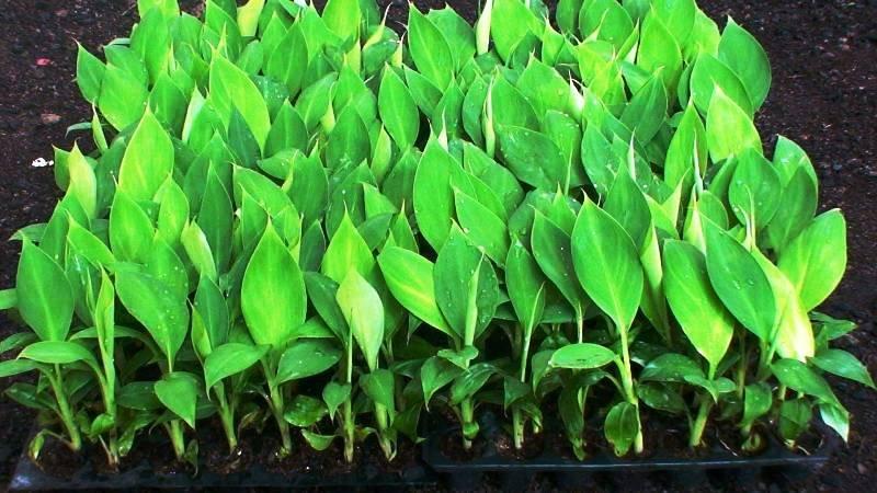Plants Propogation