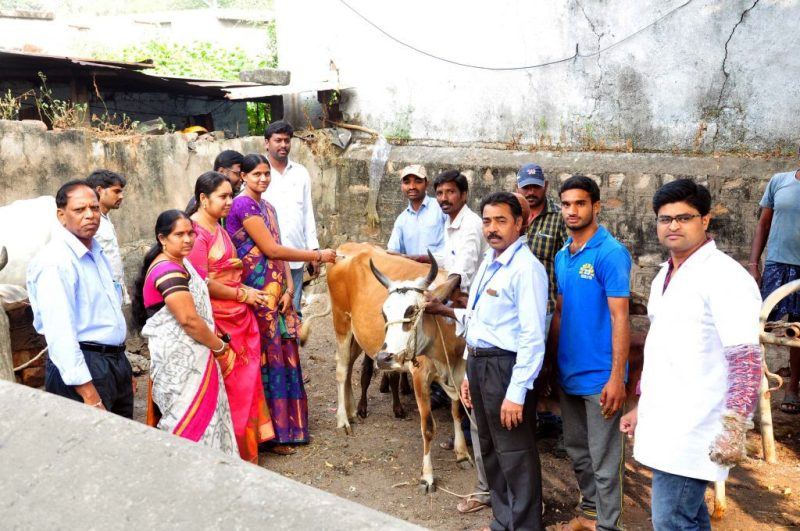 Livestock Medical Camp