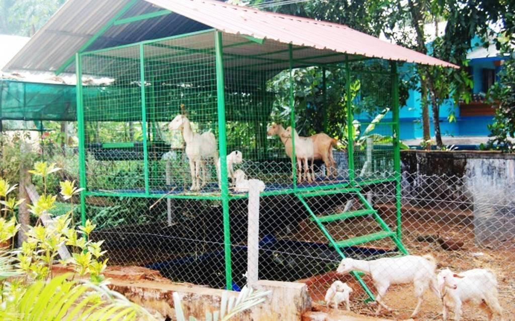 Shed Farming
