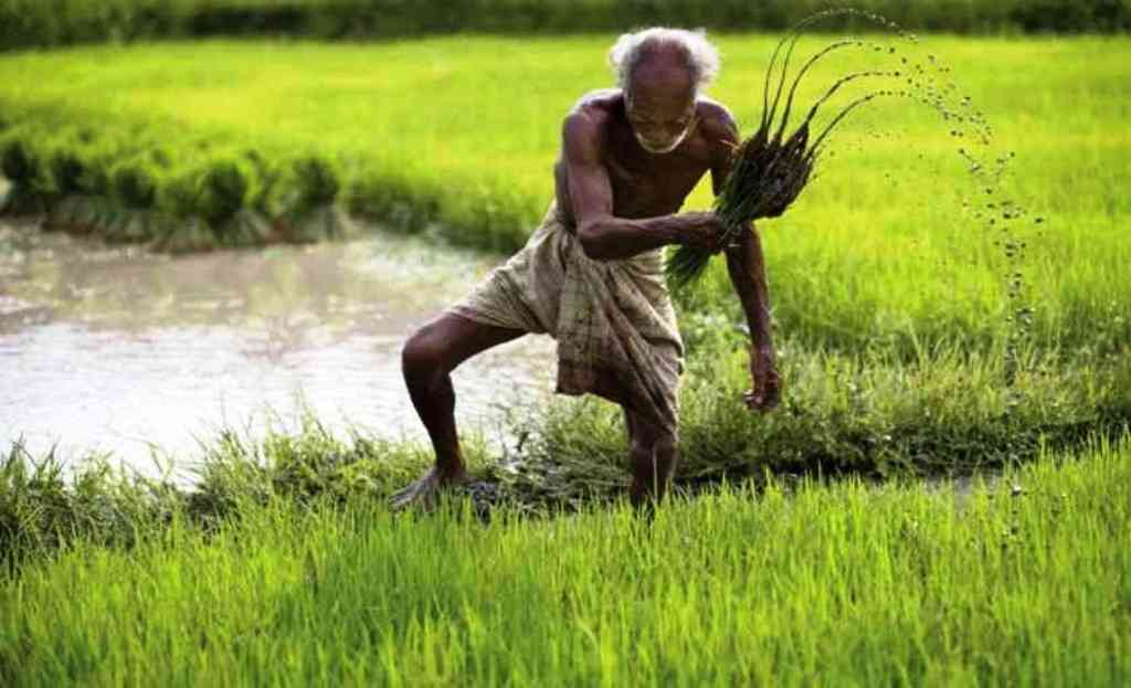 History and Significance of Farmer Day