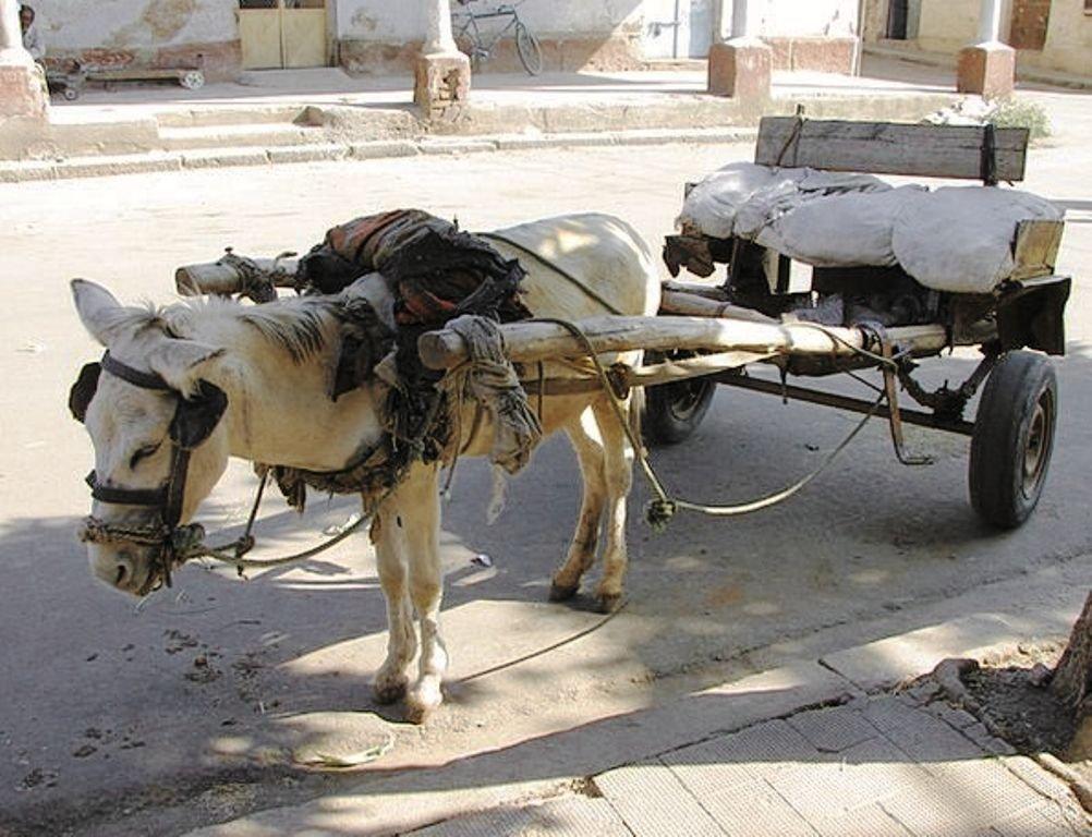 breed horse and donkey minecraft