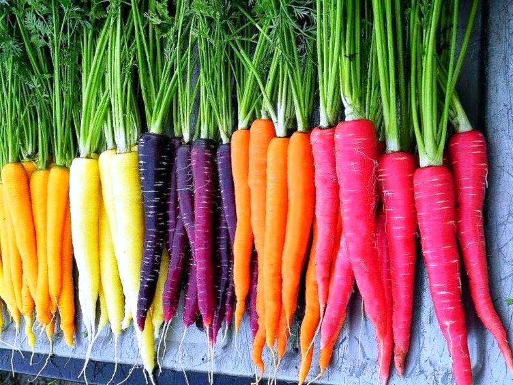 Rainbow Coloured Carrots