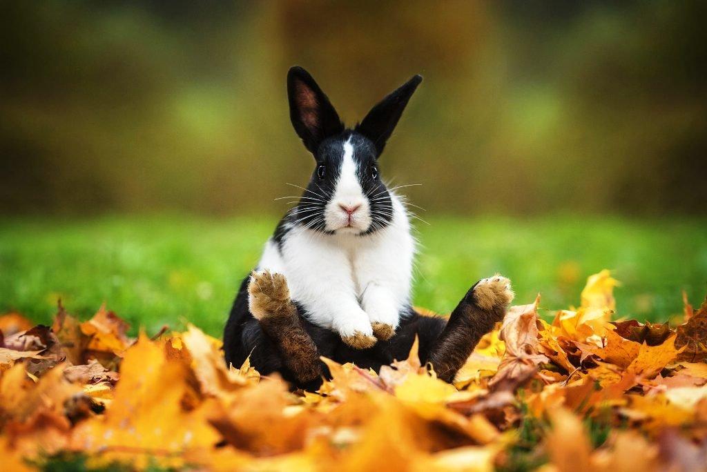 Profitable Rabbit Farming
