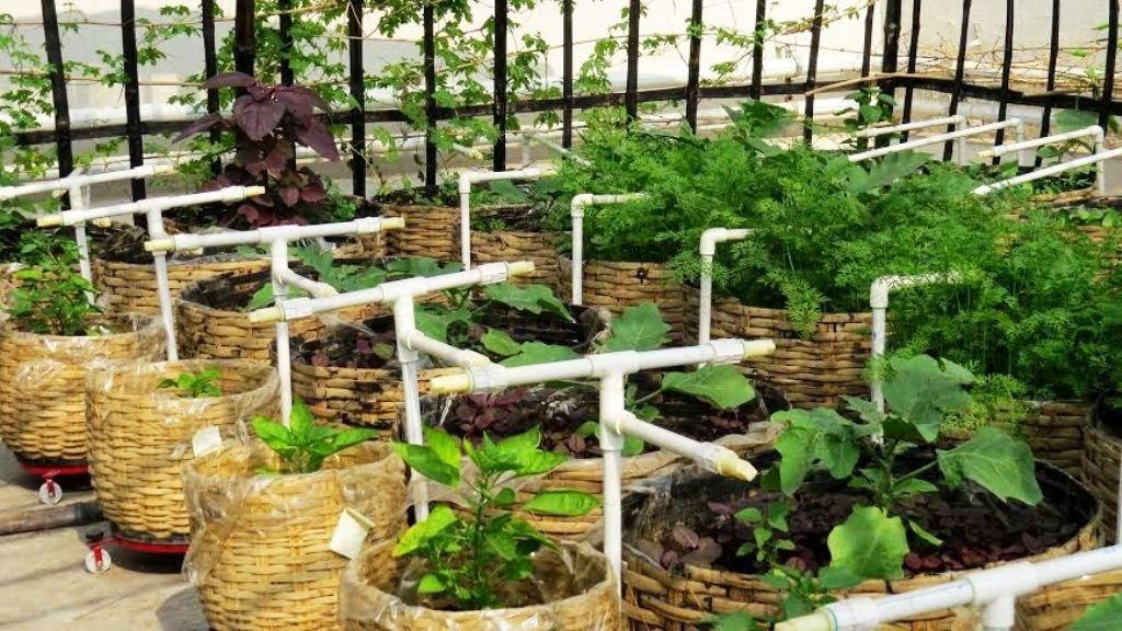 Organic rooof garden