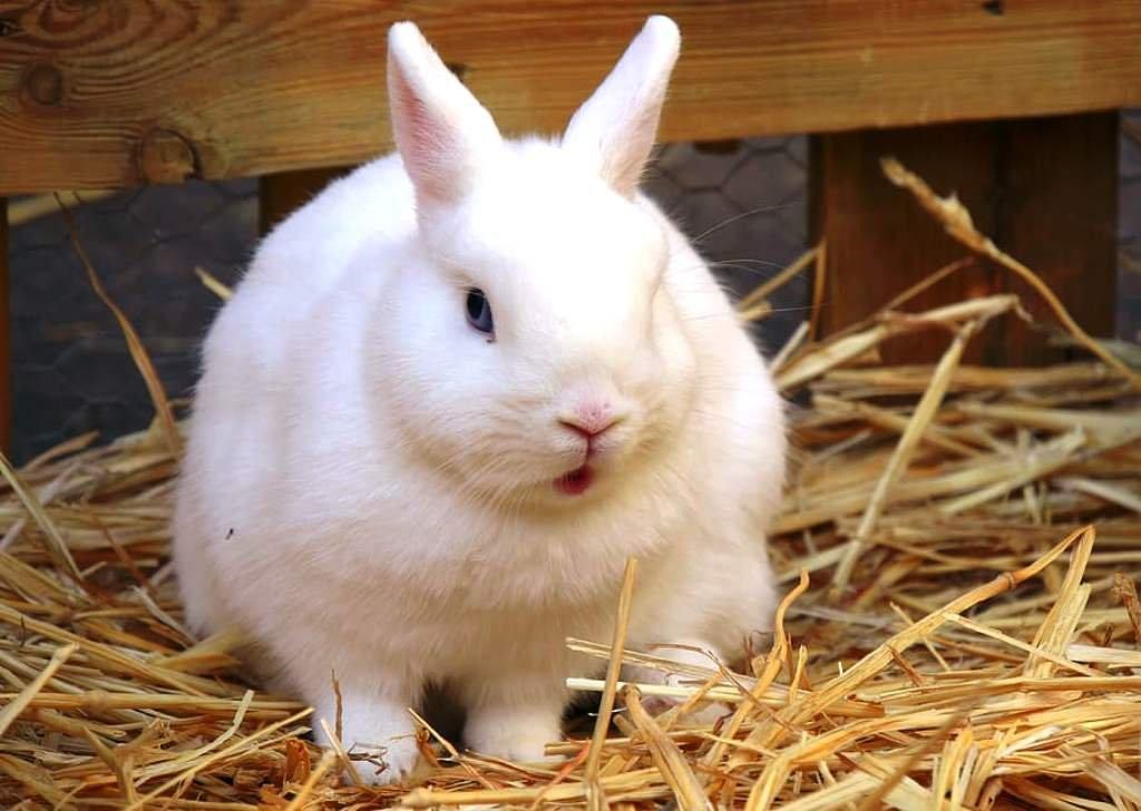 Rabbit Farming advantage and disadvantage
