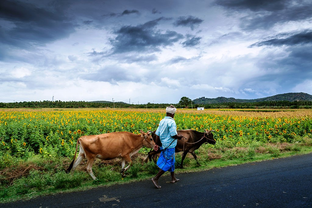 Will the rain fulfill farmers need?