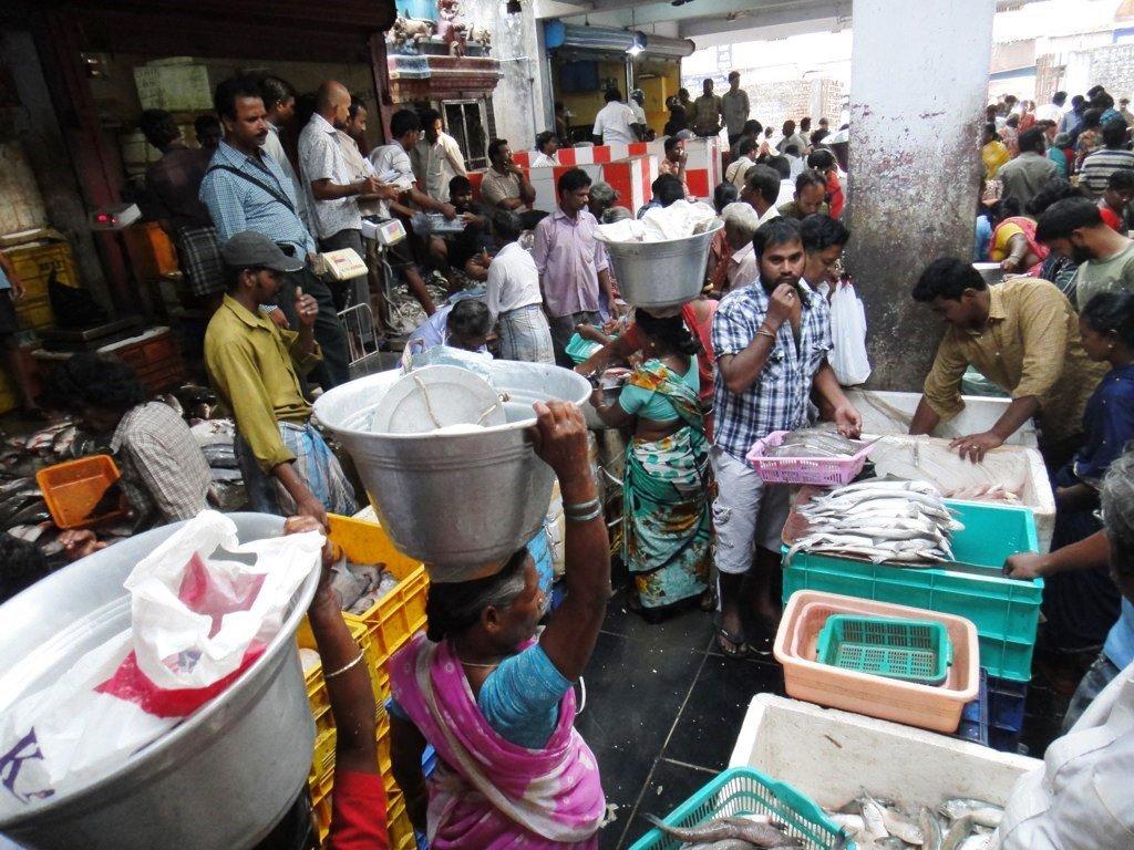 Fish Market at Kasimedu, Chennai