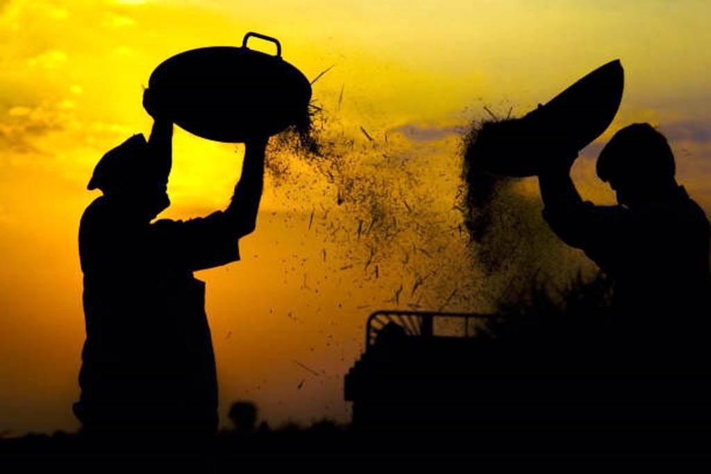 Post Harvest