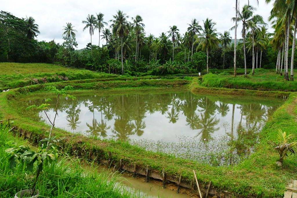 Farmland Rainwater Harvesting Systems