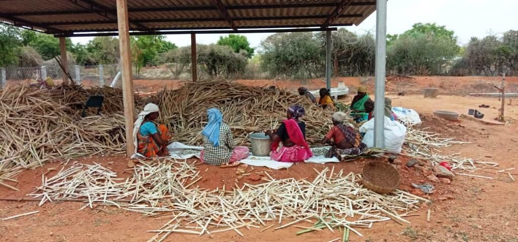Ponnarasi's Farm