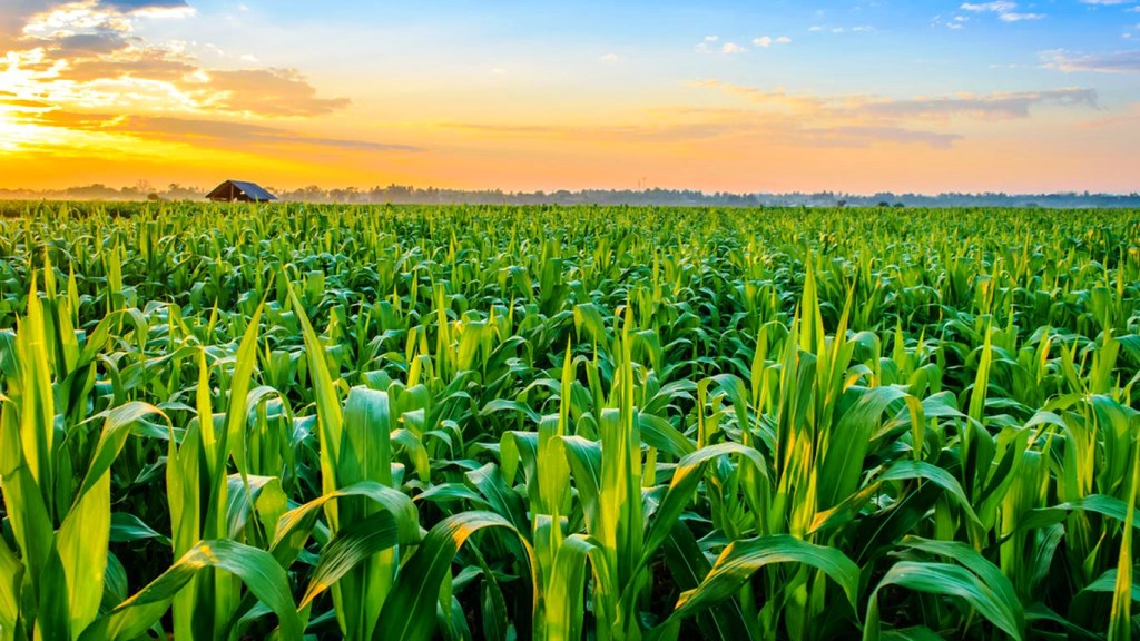 Importance of Agricultural Meteorology