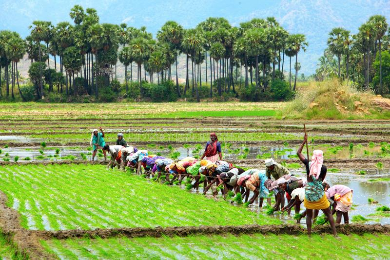 Sowing area of Kharif crops 21.2 percent more