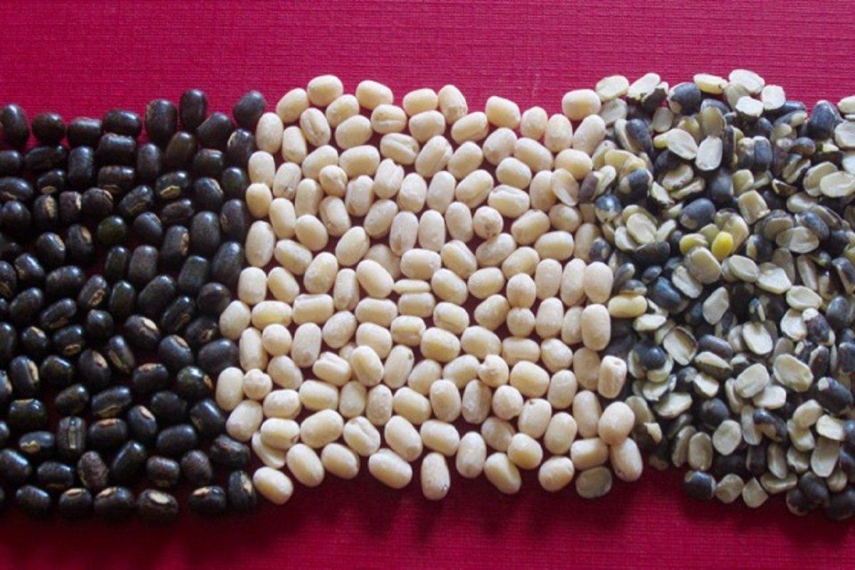 How to cultivate Urad (ulundu in tamil)