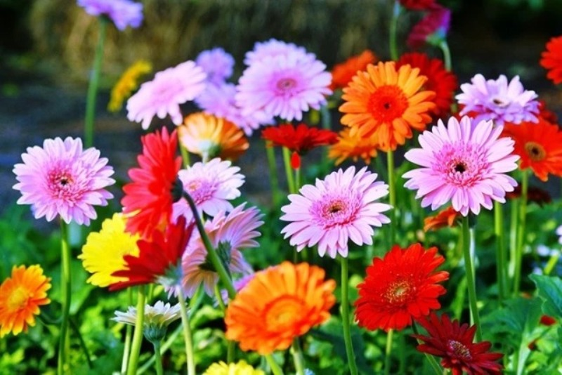 Fertilizer table for flowers Cultivation
