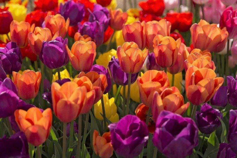 Fertilizer table for flowers