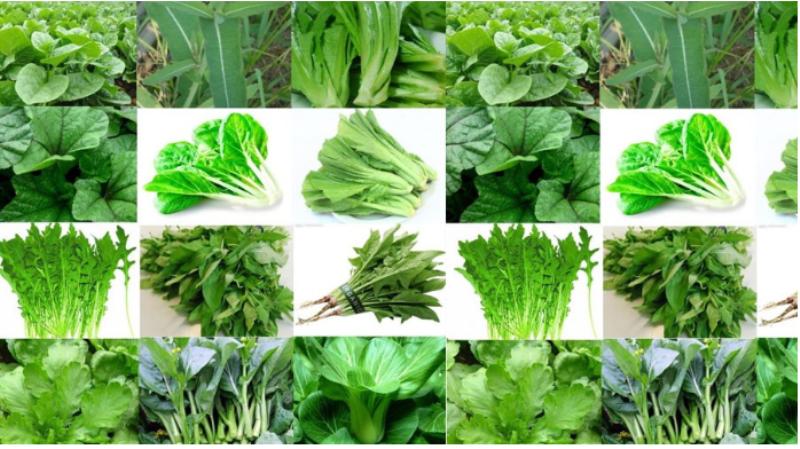 Benefits of green leaf vegetables