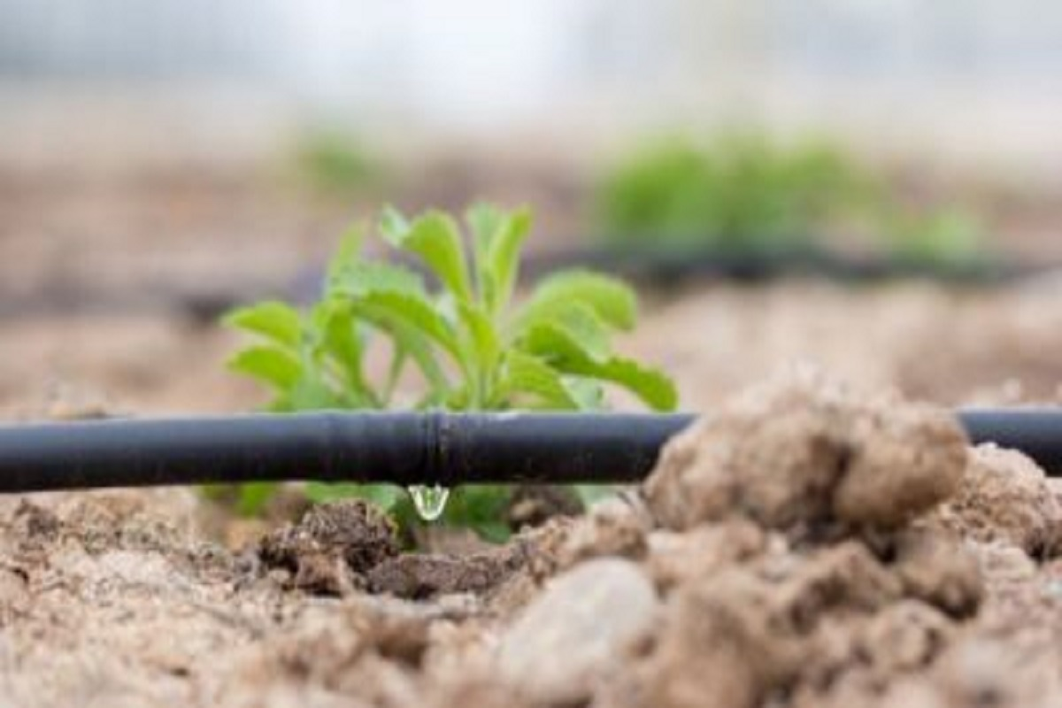 Rs.3000 subsidy for setting up of drip irrigation pit!