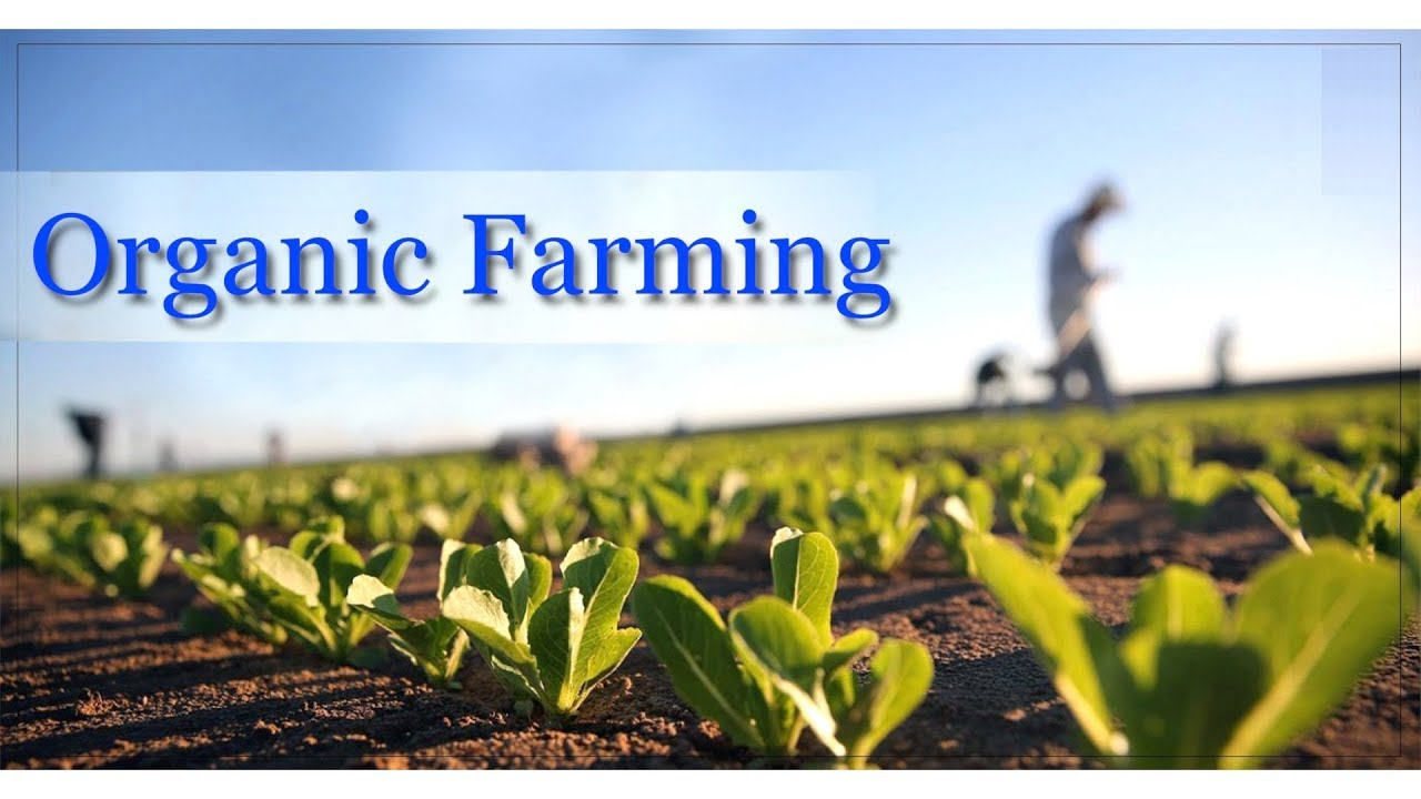 Subsidy for Organic Farming