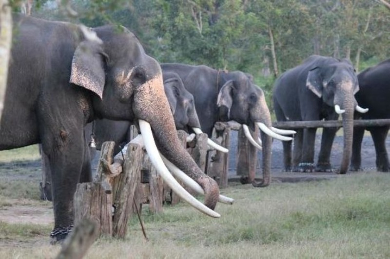 Human-Elephant Conflict Management in India launched