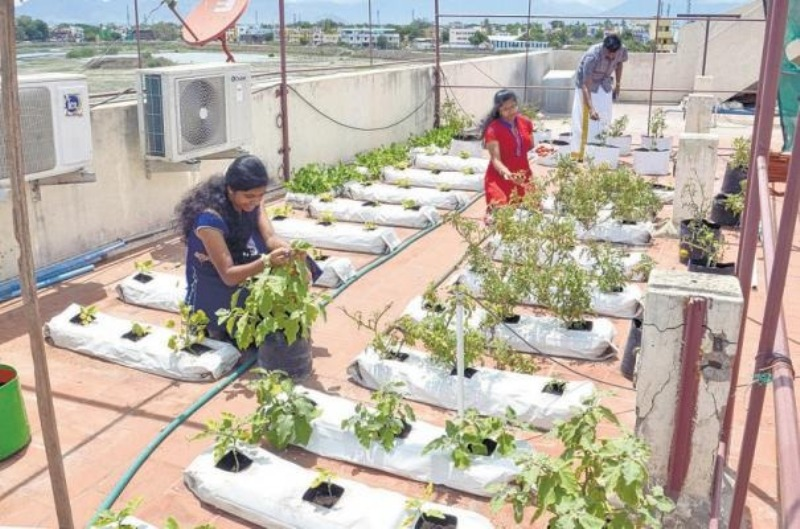 Subsidy for vegetable garden at home