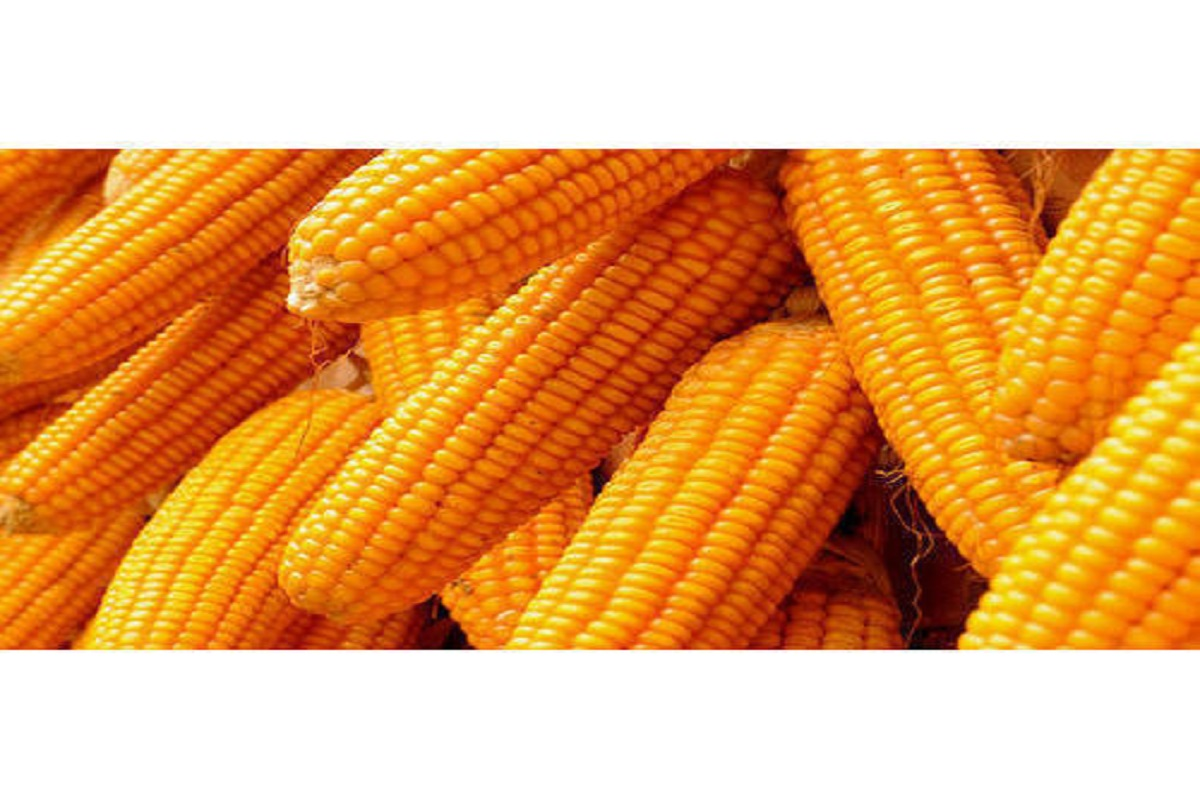 35% subsidy for small corn processing companies