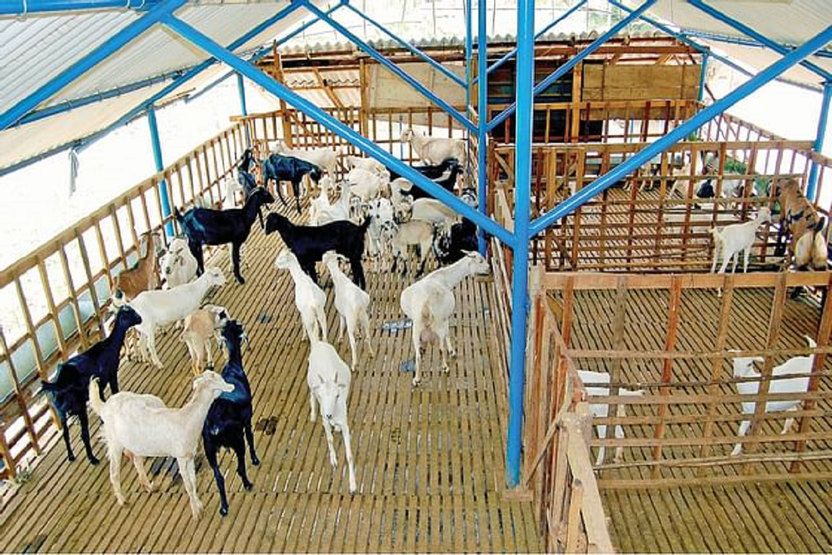 Free Sheep shed Scheme