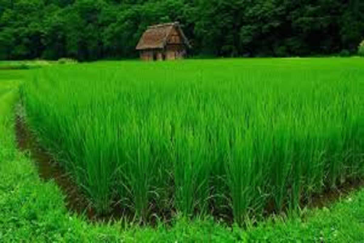 5 thousand rupees can be given as fertilizer subsidy to farmers - CACP recommendation!