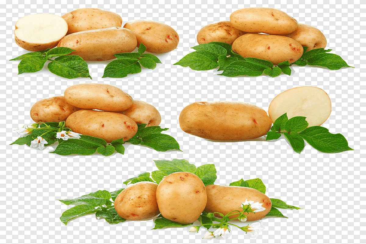 You Can Grow Potatoes In Your Home Terrace - Strategies for Cultivation!