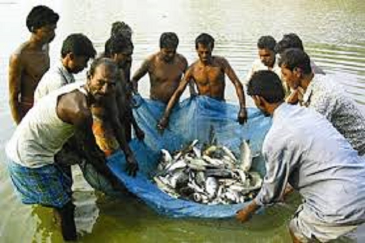 Up to 60% subsidy for fish farming
